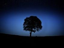 Árbol en la noche Foto de archivo