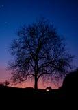 Árbol en la noche Imágenes de archivo libres de regalías
