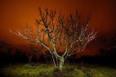 Árbol en la noche en Bustarviejo Fotos de archivo