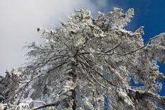Árbol en la opinión de la nieve de debajo Fotos de archivo
