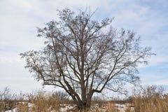 Árbol en la orilla Foto de archivo libre de regalías