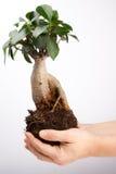 Árbol en la palma de la mano imagenes de archivo