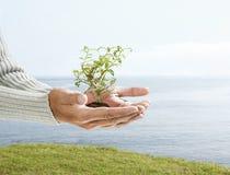 Árbol en la palma de la mano Imágenes de archivo libres de regalías