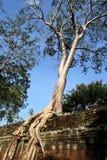 Árbol en la pared en Preah Khan Foto de archivo
