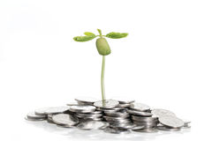 Árbol en la pila de monedas en blanco Fotografía de archivo