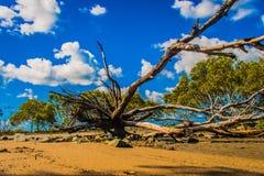 Árbol en la playa foto de archivo libre de regalías