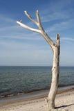 Árbol en la playa Fotografía de archivo libre de regalías