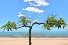 Árbol en la playa Imagenes de archivo
