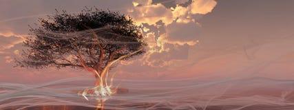 Árbol en la playa Imagen de archivo libre de regalías
