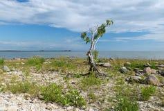 Árbol en la playa Foto de archivo