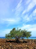 Árbol en la playa de piedra imágenes de archivo libres de regalías