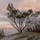 Árbol en la playa en la puesta del sol Imagenes de archivo
