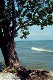 Árbol en la playa rocosa Imagenes de archivo