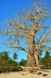 Árbol en la playa, Tanzania del baobab imagen de archivo