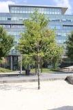 Árbol en la playa Toronto, Canadá de Suger Imagen de archivo