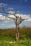 Árbol en la playa tropical Foto de archivo