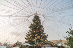 Árbol en la Plaza Roja Imagenes de archivo