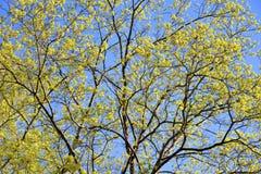 Árbol en la primavera Fotos de archivo libres de regalías