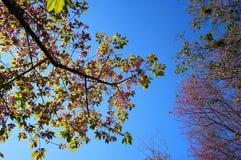 Árbol en la primavera Foto de archivo