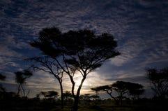 Árbol en la puesta del sol Imagen de archivo libre de regalías