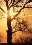 Árbol en la puesta del sol Foto de archivo
