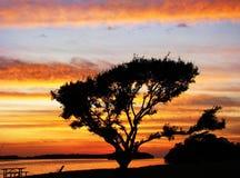 Árbol en la puesta del sol Imágenes de archivo libres de regalías