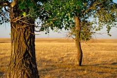 Árbol en la puesta del sol fotografía de archivo libre de regalías