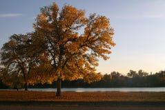 Árbol en la puesta del sol Imagen de archivo