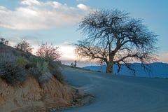 Árbol en la puesta del sol en Hooper Hill en la carretera de Caliente Bodfish apenas fuera del lago Isabella California Fotos de archivo libres de regalías