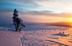Árbol en la puesta del sol en invierno Imágenes de archivo libres de regalías