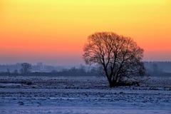 Árbol en la puesta del sol en invierno Imagen de archivo libre de regalías