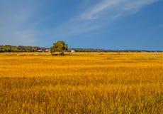 Árbol en la región pantanosa Fotografía de archivo libre de regalías