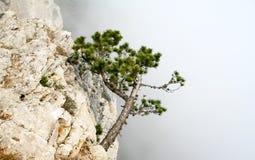 Árbol en la roca Foto de archivo