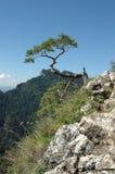 Árbol en la roca Imágenes de archivo libres de regalías