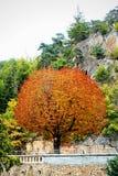 Árbol en la ruta Fotos de archivo