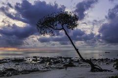 Árbol en la salida del sol Fotos de archivo libres de regalías