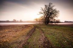 Árbol en la salida del sol Foto de archivo libre de regalías