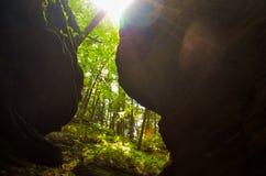 Árbol en la selva Hojas verdes del helecho fotos de archivo libres de regalías
