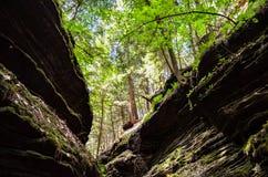 Árbol en la selva Hojas verdes del helecho foto de archivo
