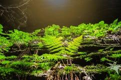 Árbol en la selva Hojas verdes del helecho fotos de archivo