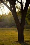 Árbol en la tierra de pasto fotos de archivo