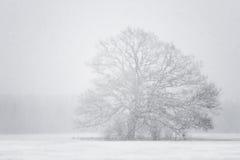 Árbol en la ventisca (nota: la nieve forma escamas en foco!) Fotos de archivo