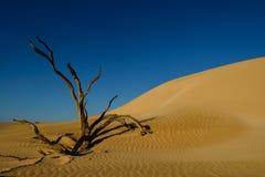 Árbol en las dunas Imagen de archivo