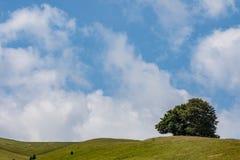Árbol en las montañas Imagenes de archivo