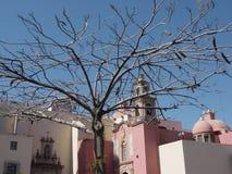 Árbol en Leon Fotografía de archivo
