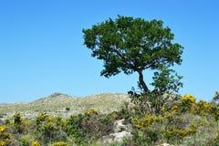 Árbol en los hillocks. Fotos de archivo