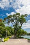 Árbol en los parques Fotos de archivo