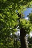Árbol en luz del sol Imagenes de archivo
