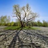 Árbol en madrugada del contraluz Imagen de archivo