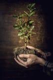 Árbol en manos Imagen de archivo